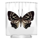 Butterfly Species Euripus Nyctelius Euploeoides  Shower Curtain