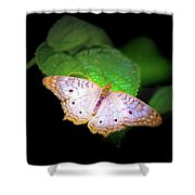White Peacock Butterfly Wonderland A Series  Shower Curtain