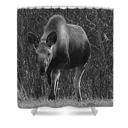Bw Moose Shower Curtain