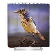 Blue Scrub Jay Shower Curtain