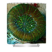 Cactus Ring Coral Shower Curtain