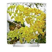 Caesalpinia Cacalaco In Huntington Desert  Gardens In San Marino-california  Shower Curtain