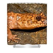 California Giant Salamander Shower Curtain
