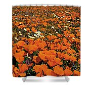 California Poppies Desert Dandelions California Shower Curtain