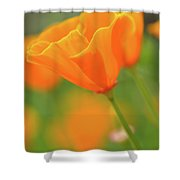 California Spring Poppy Macro Close Up Shower Curtain
