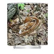 Camouflaged Fawn Shower Curtain