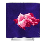 Cancer Cell Death, Sem 6 Of 6 Shower Curtain