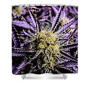 Cannabis Macro Shower Curtain
