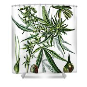 Cannabis Sativa Shower Curtain