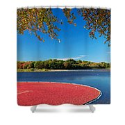 Cape Cod Cranberry Bog Shower Curtain
