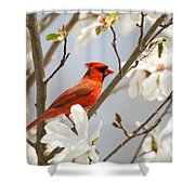 Cardinal In Magnolia Shower Curtain