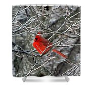 Cardinal On Icy Branches Shower Curtain