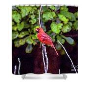 Cardinal Twigging A Break Shower Curtain