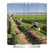 Carrot Harvest Shower Curtain