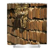 Cat On A Brick Wall Shower Curtain