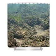 Catfish Fry Shower Curtain