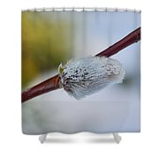 Catkins Shower Curtain