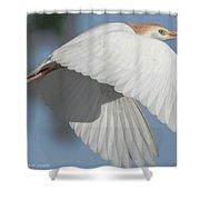 Cattle Egret In Flight Shower Curtain