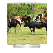 Cattle In A Pasture Shower Curtain