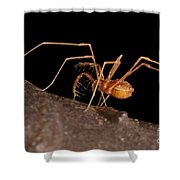 Cave Harvestman Shower Curtain