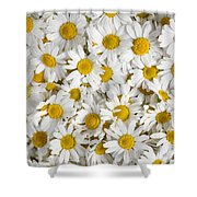 Chamomile Flowers Shower Curtain