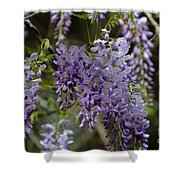 Charleston In The Spring Shower Curtain