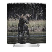 Chasing Tail Shower Curtain