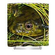 Chilean Widemouth Frog Shower Curtain