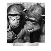 Chimpanzees Shower Curtain