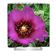 Cholla Cactus Flower Shower Curtain