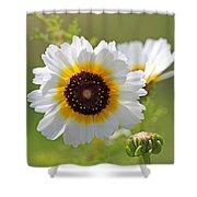 Chrysanthemum Named Polar Star Shower Curtain