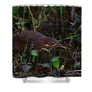 Cinnamon Bittern Shower Curtain