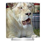 Circus Lion Shower Curtain