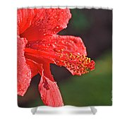 Close Up Of A Red Hibiscus Shower Curtain