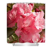 Close-up Of Pink Flowers In Bloom Shower Curtain