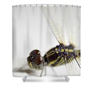 Close Up Shoot Of A Anisoptera Dragonfly Shower Curtain