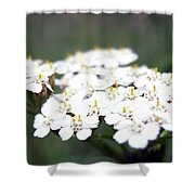 Close-ups Of A White Meadow Flower Shower Curtain