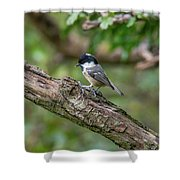 Coal Tit Shower Curtain