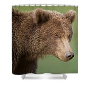 Coastal Brown Bear Shower Curtain