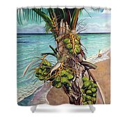 Coconuts On Beach Shower Curtain