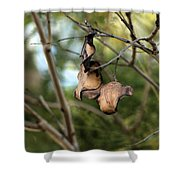 Coffee Brown Pods Shower Curtain