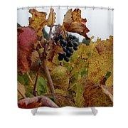 Colchagua Valley Vineyard  Shower Curtain