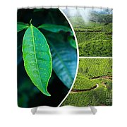 Collage Of  Tea Plantations In Munnar  Shower Curtain