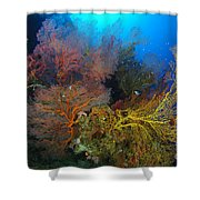 Colorful Assorted Sea Fans And Soft Shower Curtain