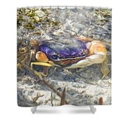 Colorful Crabstract 2 Shower Curtain