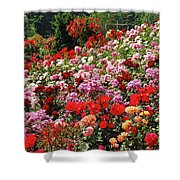Colorful Spring Rose Garden Shower Curtain