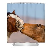 Colts Shower Curtain