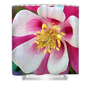 Columbine Flower 1 Shower Curtain