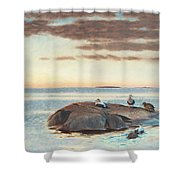 Common Eiders On A Rock Shower Curtain