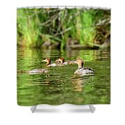 Common Merganser Shower Curtain